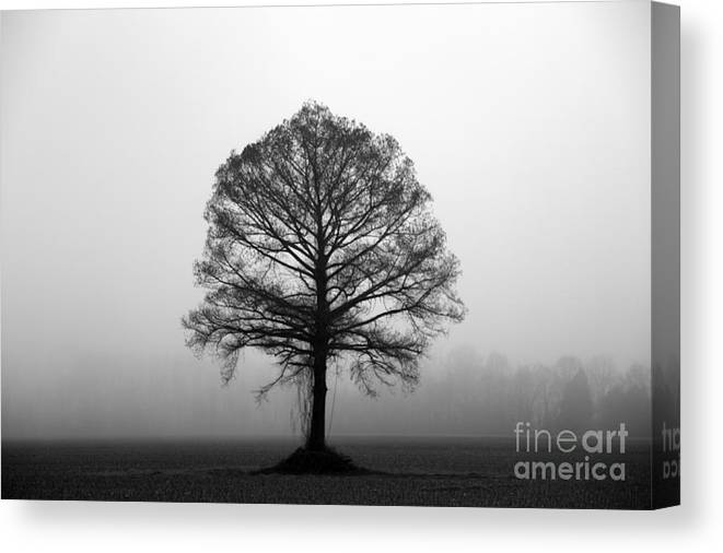 Tree Canvas Print featuring the photograph The Tree by Amanda Barcon