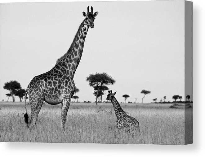Africa Canvas Print featuring the photograph Meet My Little One by Michele Burgess