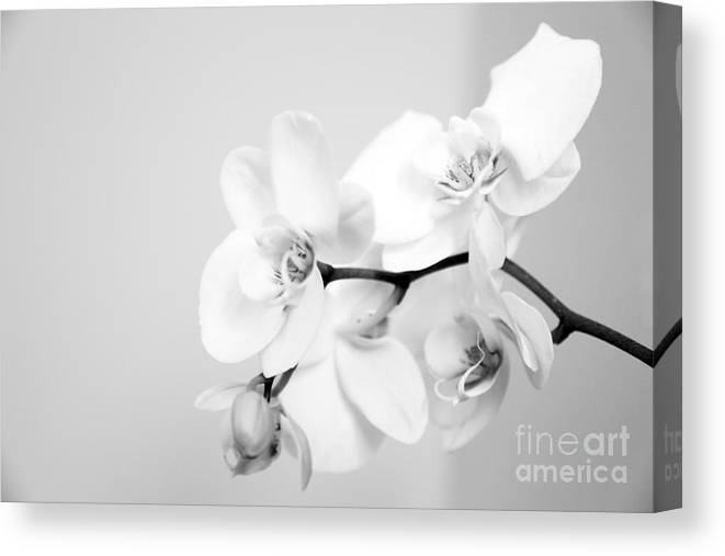 Orchid Canvas Print featuring the photograph Orchid by Amanda Barcon