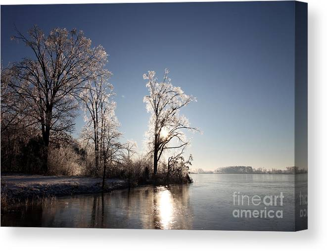 Tree Canvas Print featuring the photograph Trees In Ice Series by Amanda Barcon