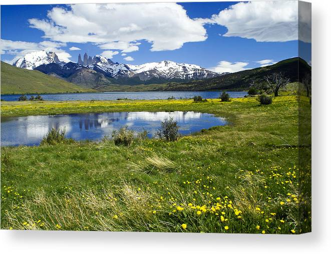 Patagonia Canvas Print featuring the photograph Springtime in Torres del Paine by Michele Burgess