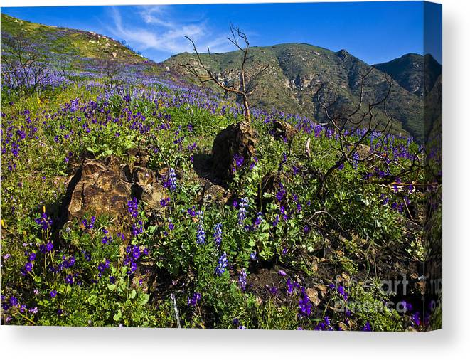 Landscape Canvas Print featuring the photograph Amoung The Rocks by Greg Clure