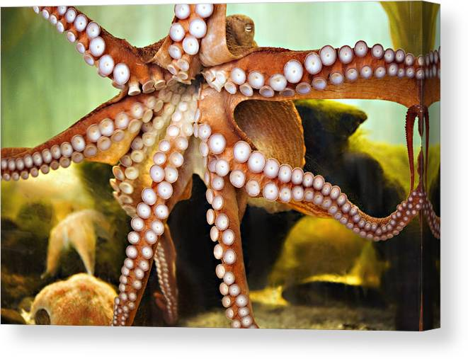 Octopus Canvas Print featuring the photograph Beautiful Octopus by Marilyn Hunt