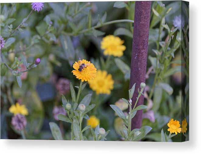 Animal Canvas Print featuring the photograph Bee at work by Adrian Bud