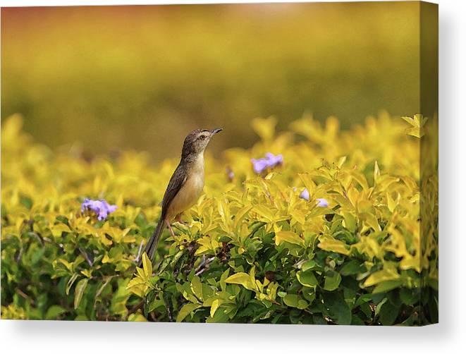 Bird Canvas Print featuring the digital art Bird in a Garden by Sandeep Gangadharan