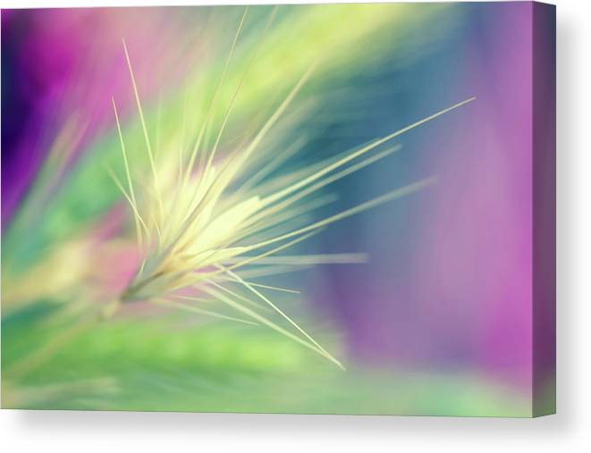 Photography Canvas Print featuring the digital art Bright Weed by Terry Davis