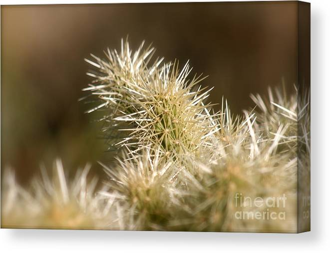 Cactus Canvas Print featuring the photograph Cacti by Nadine Rippelmeyer