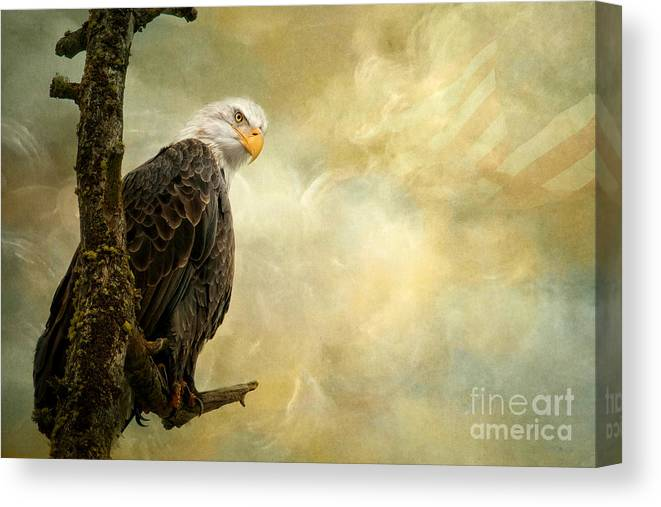 Bald Eagle Canvas Print featuring the photograph Call of Honor by Beve Brown-Clark Photography