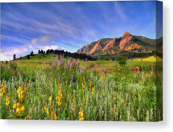 Colorado Canvas Print featuring the photograph Colorado Wildflowers by Scott Mahon