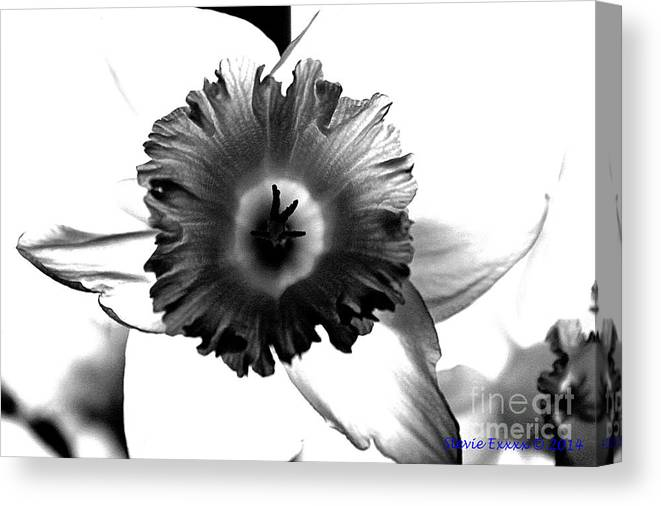 Bw black & White Modern Edge Daffodil Nature Bloom Flower Photograph Canvas Print featuring the photograph ColorBlind. by Stevie Ellis