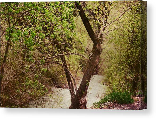 Dreamy Canvas Print featuring the photograph Cozy Stream in American Fork Canyon Utah by Colleen Cornelius