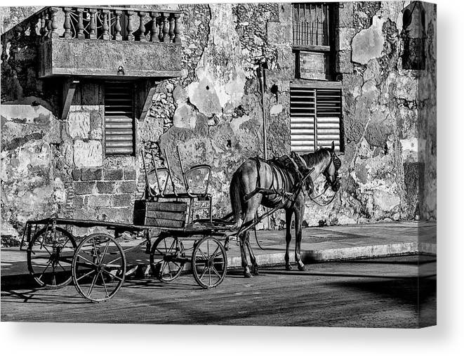Cuban Horse Power; Cuban; Horse; Power; Horse And Carriage; Carriage; Hp; Cuba; Photography & Digital Art; Photography; Photo; Photo Art; Art; Digital Art; 2bhappy4ever; 2bhappy4ever.com; 2bhappy4evercom; Tobehappyforever; Canvas Print featuring the photograph Cuban Horse Power BW by Erron