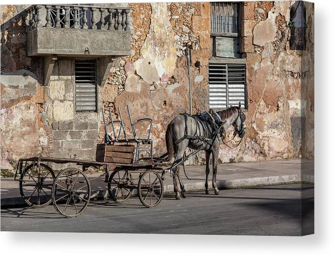 Cuban Horse Power; Cuban; Horse; Power; Horse And Carriage; Carriage; Hp; Cuba; Photography & Digital Art; Photography; Photo; Photo Art; Art; Digital Art; 2bhappy4ever; 2bhappy4ever.com; 2bhappy4evercom; Tobehappyforever; Canvas Print featuring the photograph Cuban Horse Power FC by Erron