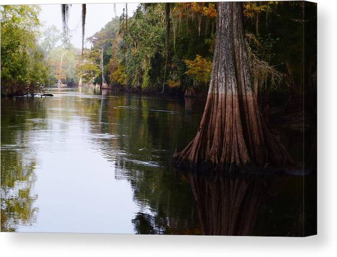 Cypress High Water Mark Canvas Print featuring the photograph Cypress High Water Mark by Warren Thompson