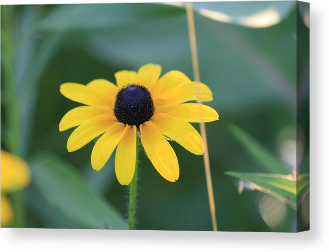 Wild Flowers Canvas Print featuring the photograph Dark Eye by Alan Rutherford