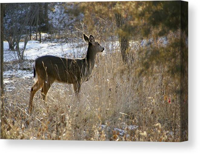Deer Canvas Print featuring the photograph Deer in Morning light by Toni Berry