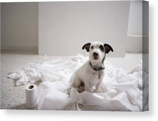 Horizontal Canvas Print featuring the photograph Dog Sitting On Bathroom Floor Amongst Shredded Lavatory Paper by Chris Amaral