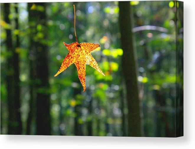 Canvas Print featuring the photograph Fall by Tony Umana