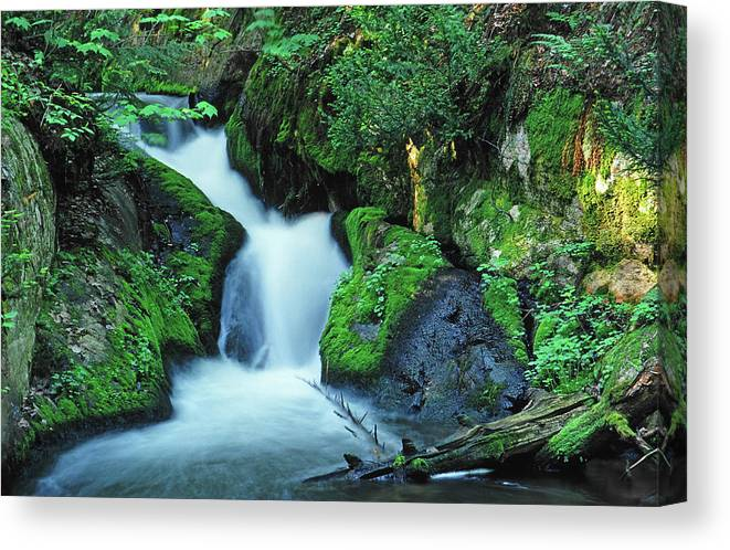 Silver Lead Creek Flows Softly Through A Michigan Hill Side Canvas Print featuring the photograph Flowing Softly by Bill Morgenstern