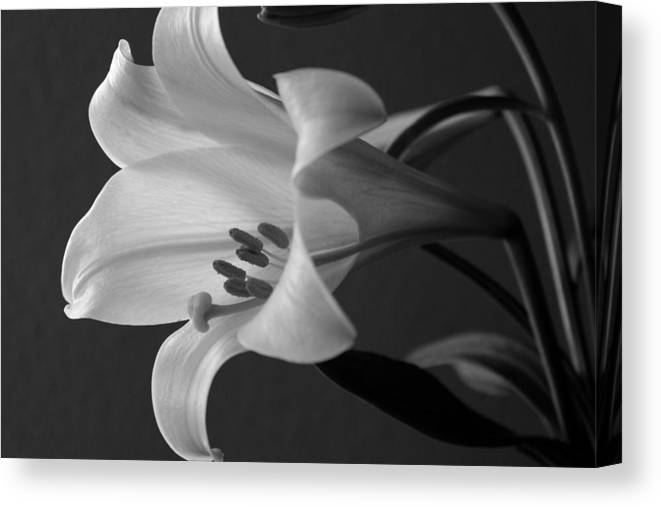 Black And White Canvas Print featuring the photograph Her Name was Lily by Colleen Cornelius
