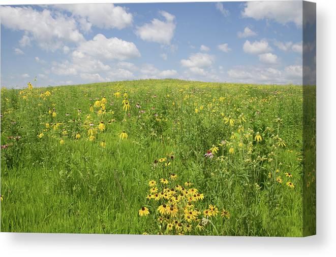 Iowa Summer Flowers I Canvas Print featuring the photograph Iowa Summer Flowers I by Dylan Punke