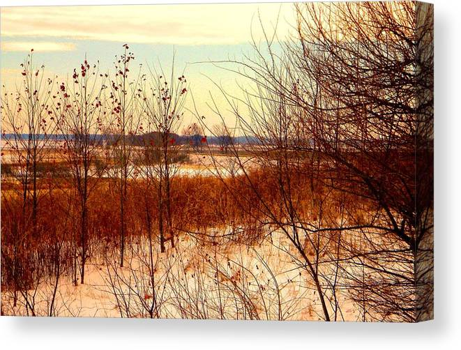 Winter Canvas Print featuring the photograph Late Winter at Emiquon by Helen ONeal