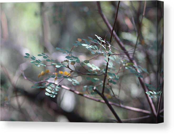 Ferny Leaves Canvas Print featuring the photograph Leaves of the Forest by Colleen Cornelius