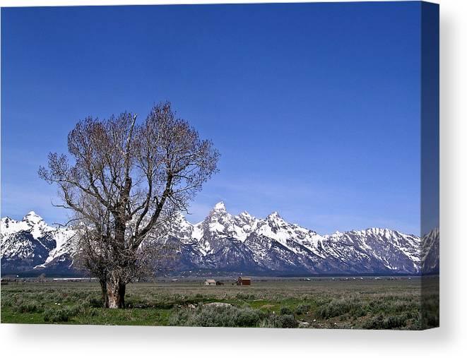 Tree Canvas Print featuring the photograph Lone tree at Tetons by Douglas Barnett