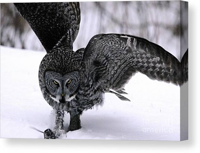 Photography Canvas Print featuring the photograph My Mouse by Larry Ricker