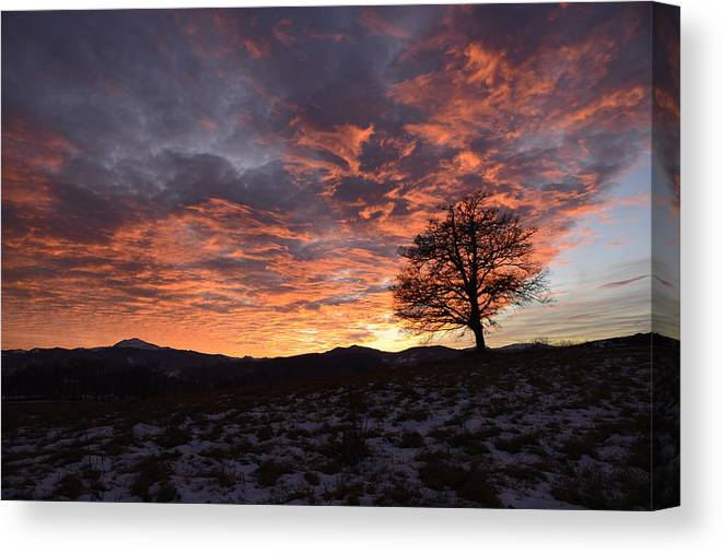 Oak Canvas Print featuring the photograph Oak At Sunset In Winter by Andrea Gabrieli