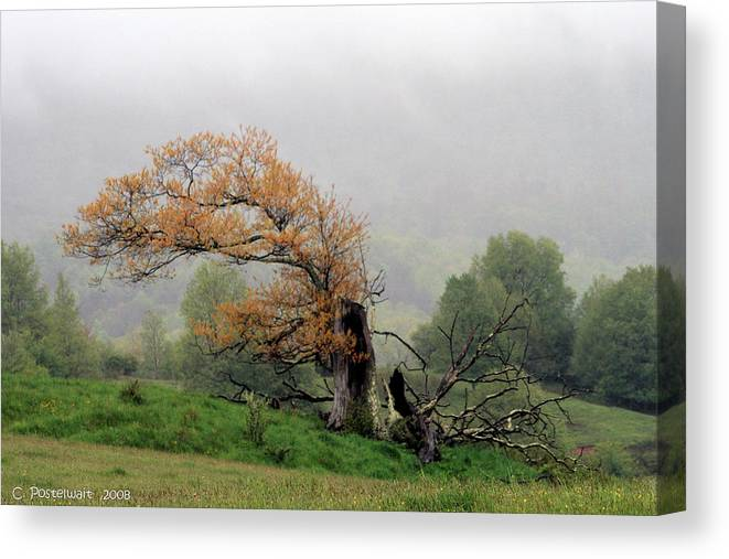 Trees Canvas Print featuring the photograph Old Tree by Carolyn Postelwait