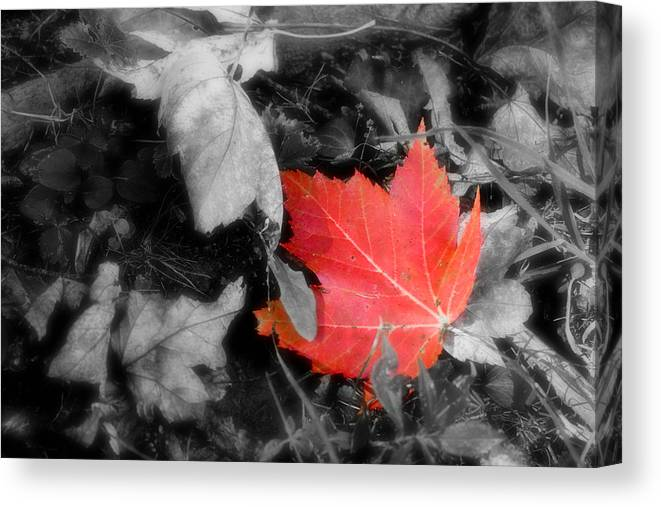 Leaf Canvas Print featuring the photograph One Of A Kind by Kenneth Krolikowski