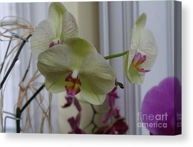 Orchid Canvas Print featuring the photograph Orchid - 103 by David Bearden