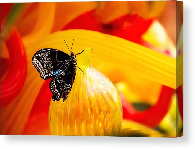 Butterfly Canvas Print featuring the photograph Owl Eye Butterfly on Colorful Glass by Tom Mc Nemar