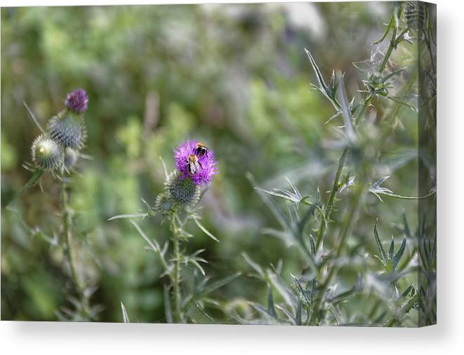 Autumn Canvas Print featuring the photograph Pair of bee pollen picking by Adrian Bud