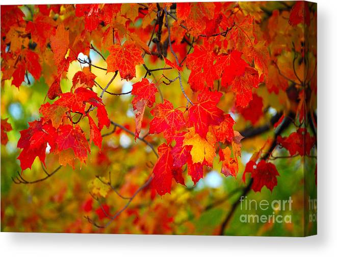 Berry Canvas Print featuring the photograph Photo Synthesis by Diane E Berry