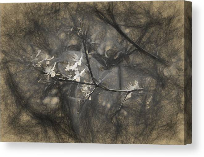 Apple Canvas Print featuring the photograph Plum blossom impression by Adrian Bud