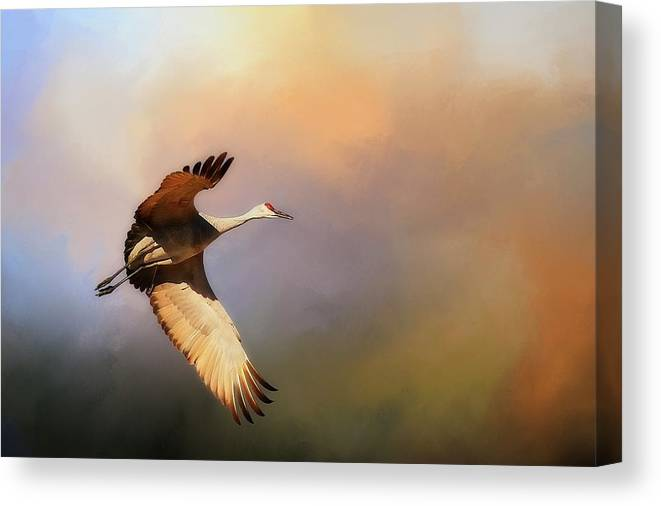 Nature Canvas Print featuring the photograph Power Stroke, Sandhill Crane, Bosque del Apache, New Mexico by Zayne Diamond Photographic