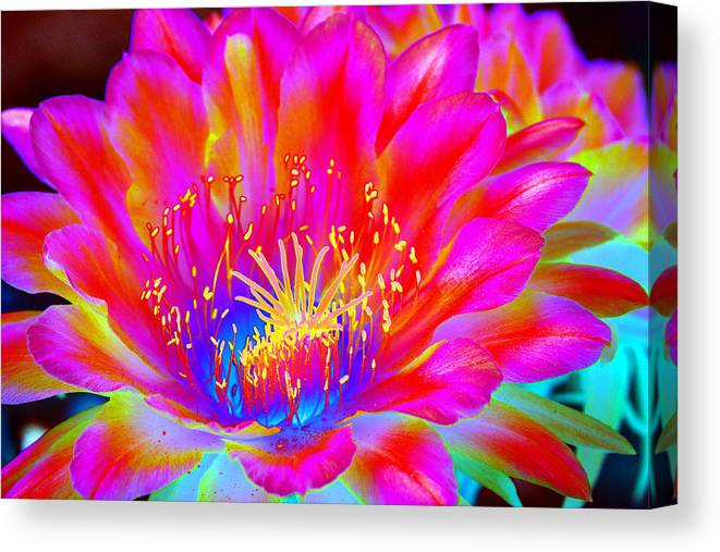 Flower Canvas Print featuring the photograph Psychedelic Pink Flower by Richard Henne