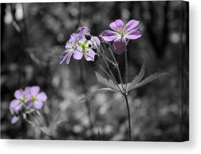 Wildflowers Canvas Print featuring the photograph Quiet Gatherings by Dylan Punke