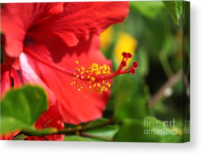 Flowers Canvas Print featuring the photograph Red Hibiscus and Green by Nadine Rippelmeyer