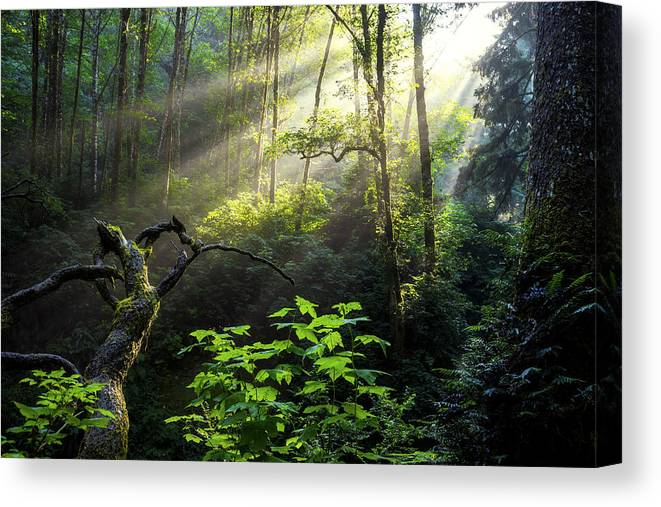 Light Canvas Print featuring the photograph Sacred Light by Chad Dutson