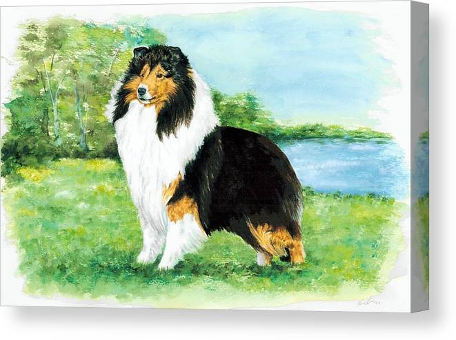 Shetland Sheepdog Canvas Print featuring the painting Sheltie Wait by Kathleen Sepulveda