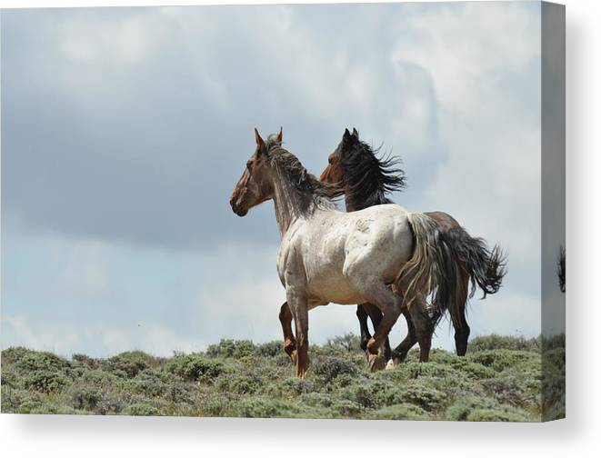 Wild Horses Canvas Print featuring the photograph So Long by Frank Madia