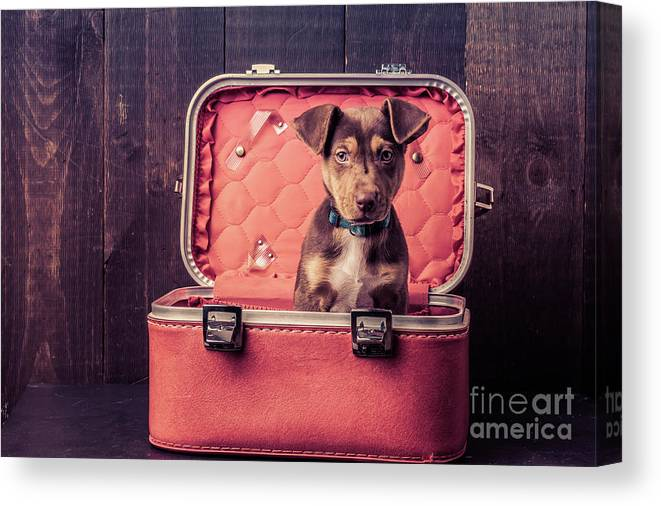 Animal Canvas Print featuring the photograph Stowaway by Edward Fielding