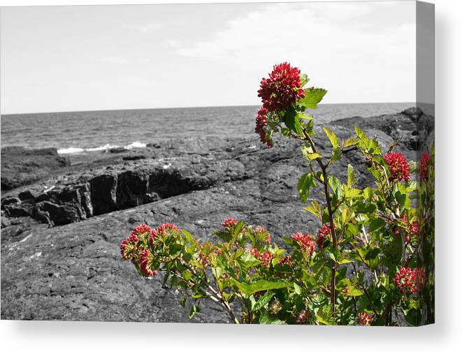 Landscape Canvas Print featuring the photograph Superior Red by Dylan Punke