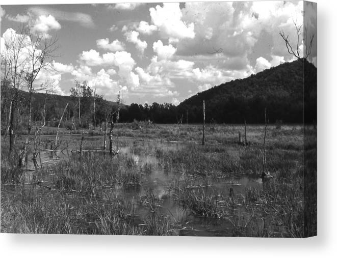 Ansel Adams Canvas Print featuring the photograph swamp1-OEM by Curtis J Neeley Jr