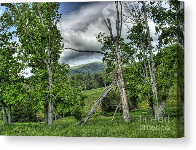 Virginia Canvas Print featuring the photograph The Buzzard Trees by Pete Hellmann