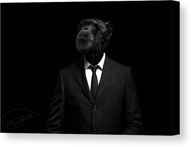 Chimpanzee Canvas Print featuring the photograph The interview by Paul Neville