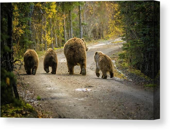 Alaska Canvas Print featuring the photograph Bear Bums by Chad Dutson